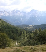 Dmites forest 447