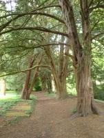 Mill side trees 06