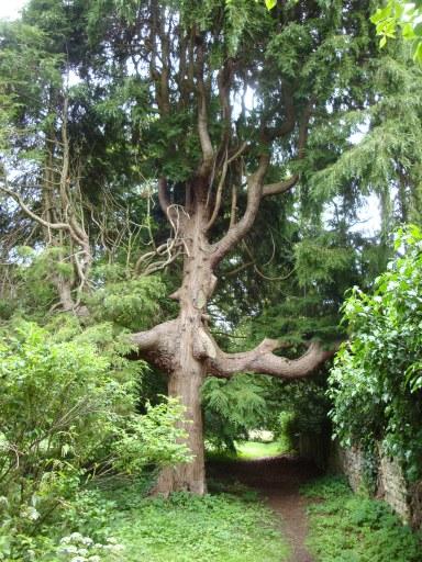 Tree back wall 21